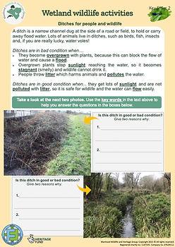 KS2 Ditch Habitats for Wildlife