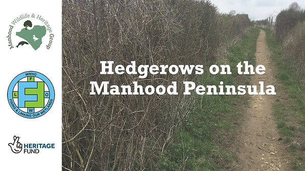 Hedgerows on the Manhood Peninsula - MWHG training presentation