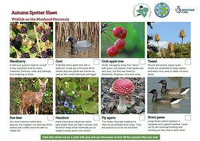 Wildlife Spotter Sheet Autumn