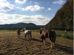 Owena's Farm Group