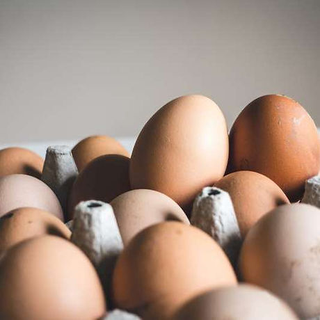Sustainable Eggs