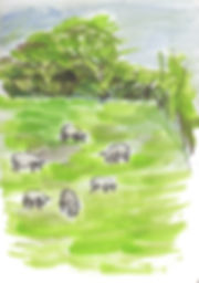 sheep in a field-web.jpg