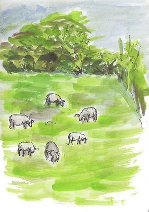 sheep in a field-web.jpg