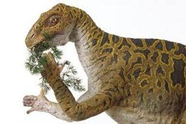 Cuckfield Connections - Iguanadon