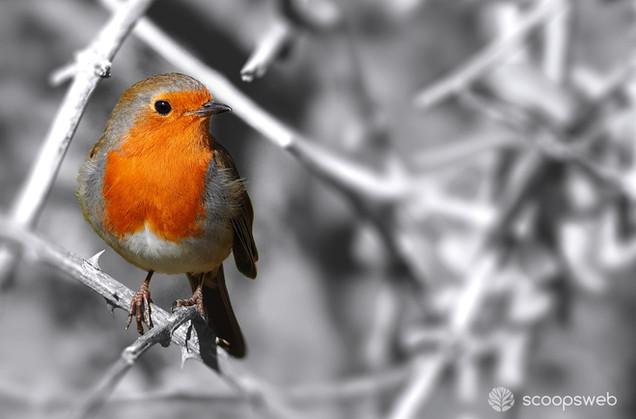 Robin on Railway Land, Lewes