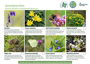 Wildlife Spotter Sheets All Seasons