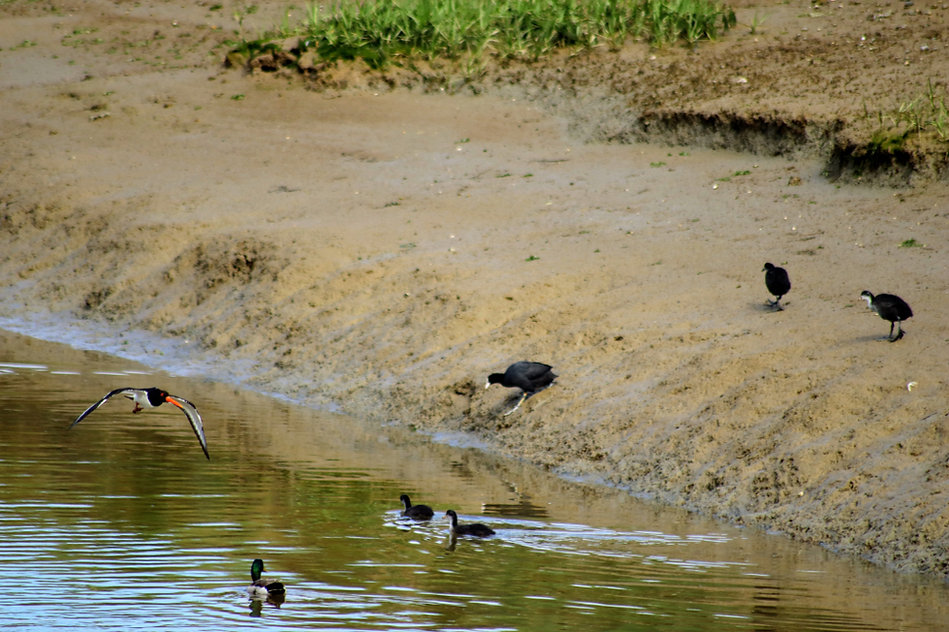 Birds on mudflat