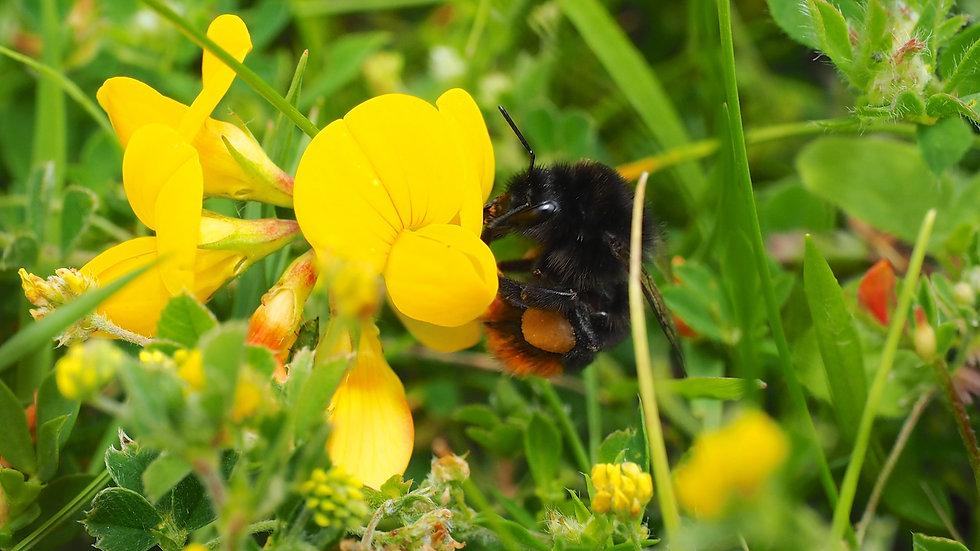 Bee (scoopsweb)