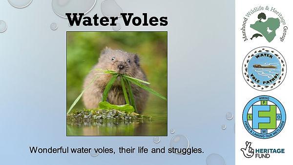 Water voles, Ecology and Surveying - Hedgerows on the Manhood Peninsula - MWHG training presentation