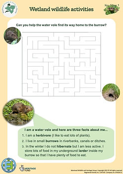 KS1 Water Vole Maze and Facts