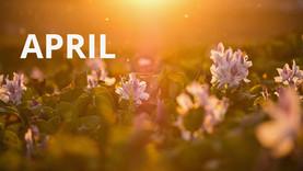 April Blog
