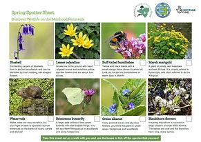 Wildlife Spotter Sheet Spring