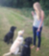 Alex Furzer - Canine Behaviourist