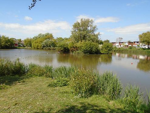 East Beach Pond Group - Manhood Wildlife and Heritage Group