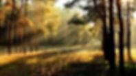 forest path sunrise.jpg