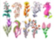 flowers002_half size.jpg