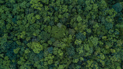 Aerial top view forest, Texture of fores