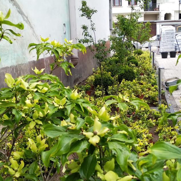 Zimozielony ogród przy hotelu Love Sopot Residence