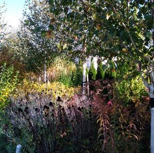 Ogród mocno bylinowy