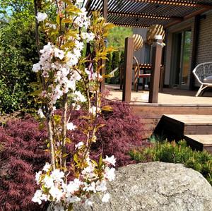 Ogród  z nutą orientu