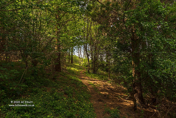 Maenporth woodland