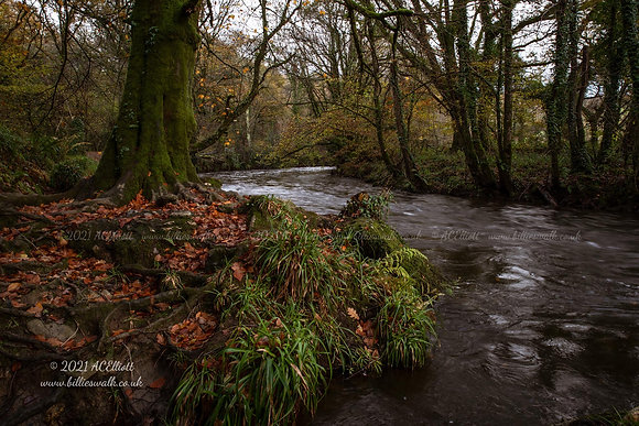 Autumn colours around the River Lynher photo and fine art print