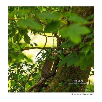 Eye spy Squirrel