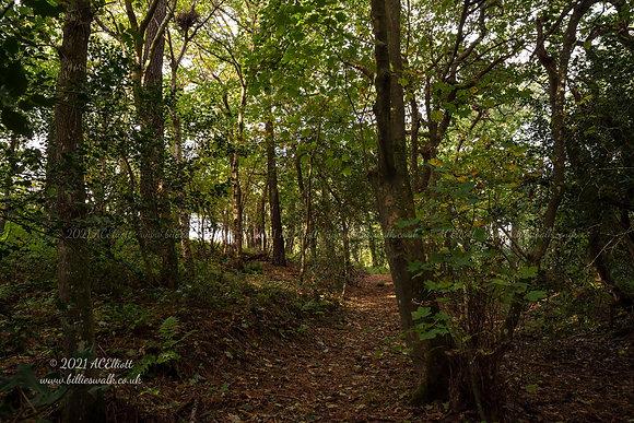 Autumn woods near Perranwell photo and fine art print
