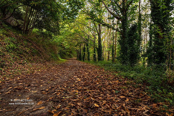 Autumnal New Road Plantation near Heligan photo and fine art print
