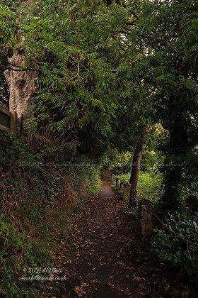 The pretty Chainwalk path in Kenwyn photo and fine art print