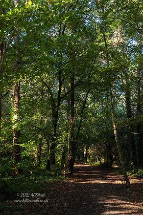 Sun dappled autumn woodland at Godolphin photo and fine art print