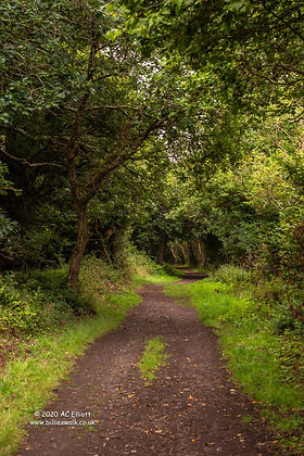 A tree lined path from Truro to Calenick photo and fine art print