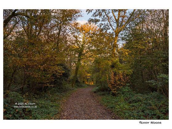 Tehidy Woods autumn