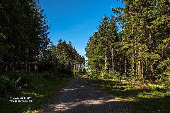 Blue sky at Bellever Forest, Devon photo and fine art print