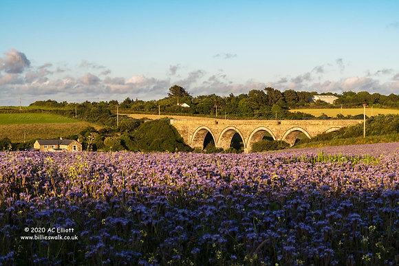 Goonbell Viaduct
