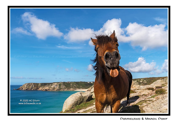 Pony sticking out her tongue at Porthcurno Greeting Card