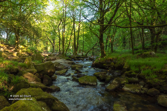 Golitha Falls Nature Reserve tranquility