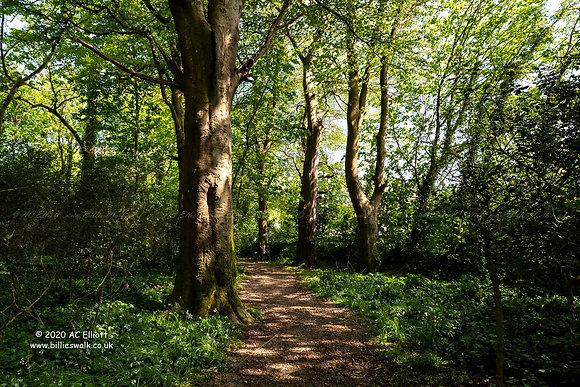 Manningham Woods