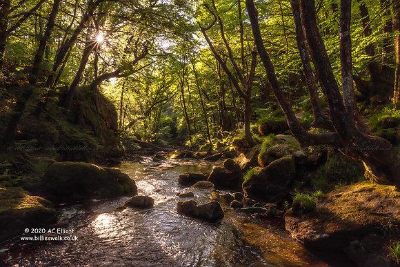 Golitha Falls Nature Reserve