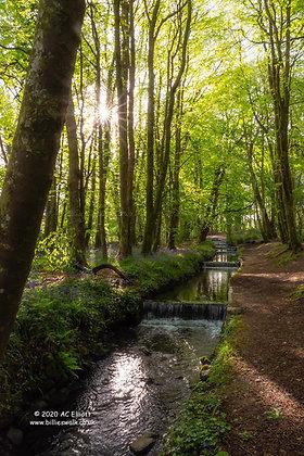 Tehidy Woods sunburst mini waterfalls