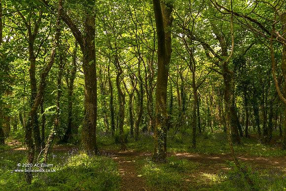Tehidy Woods spring