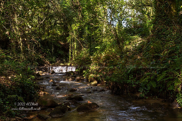 Sundappled woodland and river at Tregargus Valley photo and fine art print