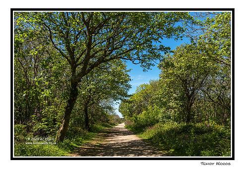 Tehidy Woods A5 gc web IMGP7484.jpg