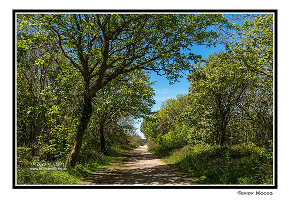 Tehidy Woods Greeting Card