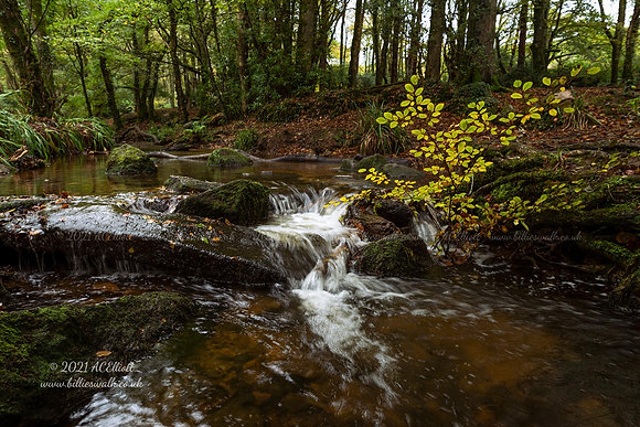 A pretty autumn river in Trevaylor Woods photo and fine art print