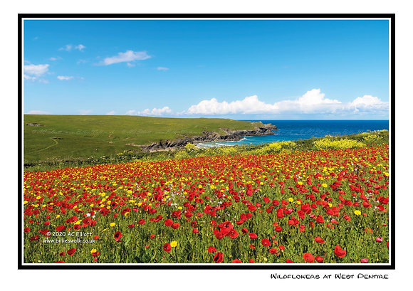 Wildflowers at West Pentire