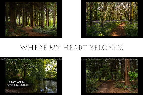 """Where my heart belongs"" any four Cornish woodland pictures set into a St Piran's flag photo and fine art print"