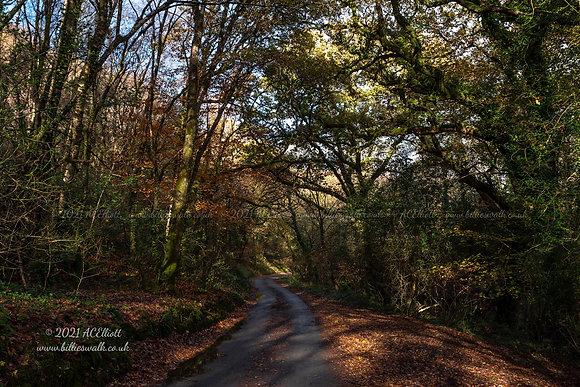 A small road running through autumn at Newbridge photo and fine art print