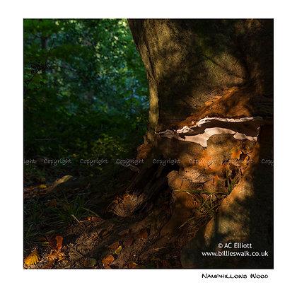 Namphillows Wood
