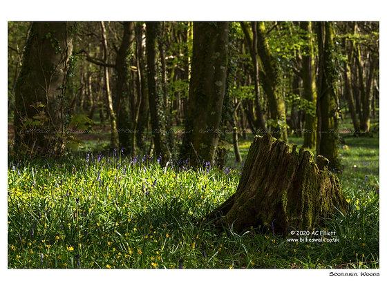 Scorrier Woods